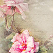 Vine Of Pink Roses Poster