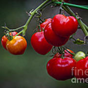 Vine Ripe Goodies  Poster by Marvin Spates