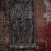 Vines Of Decay Poster