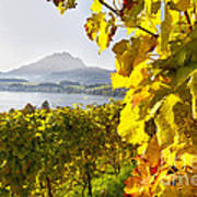 Vineyard At Lake Lucerne Poster by George Oze