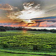 Vineyard At Sunrise Poster by Steven Ainsworth