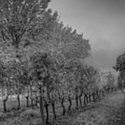 Vineyard Fog Poster