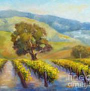 Vineyard Gold Poster
