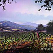 Vineyard Napa Sonoma Poster by Robert Foster