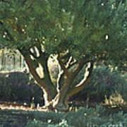 Vineyard Olive Poster