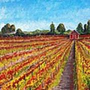 Vineyard On Dry Creek Road Poster