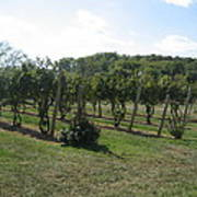 Vineyards In Va - 121251 Poster by DC Photographer