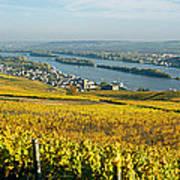 Vineyards Near A Town, Rudesheim Poster