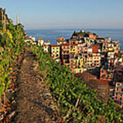 Vineyards Of Manarola Poster