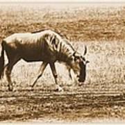 Vintage African Safari Wildbeest Poster