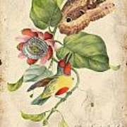 Vintage Bird Study-b Poster