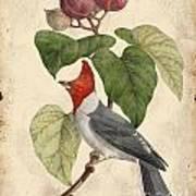Vintage Bird Study-d Poster