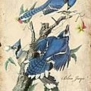 Vintage Bird Study-f Poster