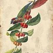 Vintage Bird Study-h Poster