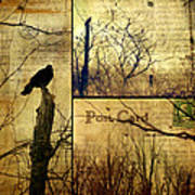 Vintage Birds Collage Poster