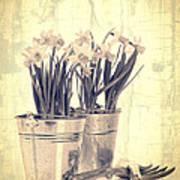 Vintage Daffodils Poster