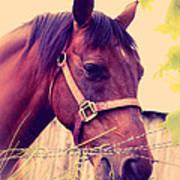 Vintage Horse Poster