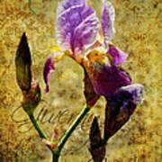 Vintage Iris Poster