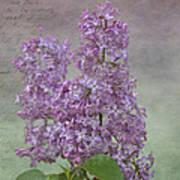 Vintage Lilacs Poster
