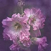 Vintage Pink And White Hollyhocks Poster
