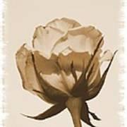 Vintage Rose 2013 Poster
