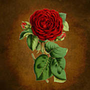 Vintage Rose Reflections Poster