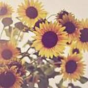 Vintage Sunflowers In The Garden Poster