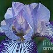 Violet Lines Poster