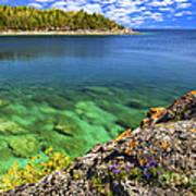 Violets At Georgian Bay Poster