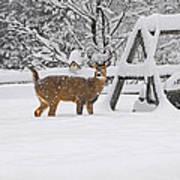 Visiting Winter Buck Poster
