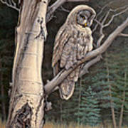 Visitor From The North-great Grey Owl Poster