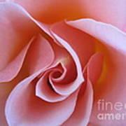 Vivacious Pink Rose Poster