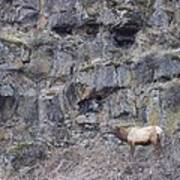 Volcanic Formation And Elk Poster