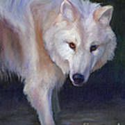 Wading Wolf Poster