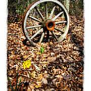 Wagon Wheel Daffodil Poster