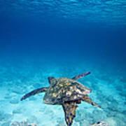 Turtle Soar Poster