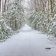 Walk In Snowy Woods Poster