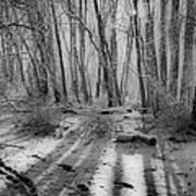 Walking  Amongst Shadows Poster by Thomas  MacPherson Jr