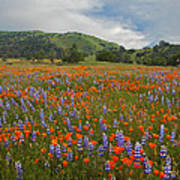 Walking In The Wildflowers Poster
