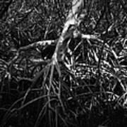 Walking Tree Number 2 Poster