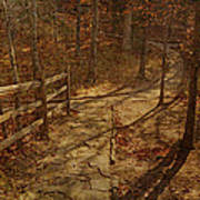 Walkway Through The Forest Poster