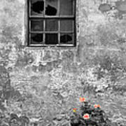 Window And Flowers Poster