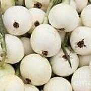 Walla Walla Sweet Onions Poster