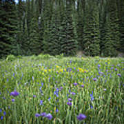 Wallowa Wildflowers Poster