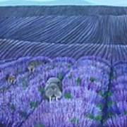 Walruses In A Field Of Lavender Poster