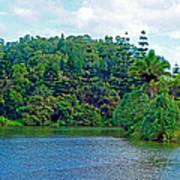 Waoleke Pond Forest Poster