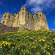 Warkworth Castle In Spring Poster