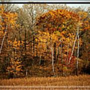 Warm Autumn Glow Poster