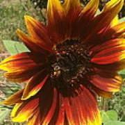 Warm Sun Flower Poster