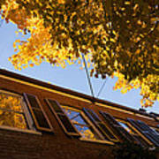 Washington D C Facades - Reflecting On Autumn In Georgetown  Poster